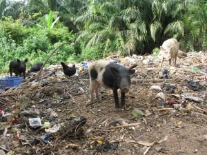 Une décharge sauvage à Ouidah où divaguent les animaux