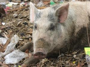 Mmmhhh !!! Le bon plastique qui va étouffer les animaux !