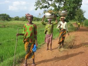 dans les rizières vers Sindou
