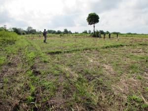 Après la 2ème récolte de riz