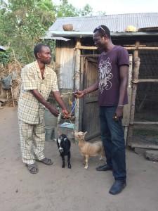 Février 2015; don du premier couple de chèvres à un membre du groupement Maussi