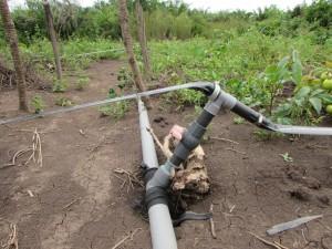 Détail du système d'irrigation avec raccordement des bandes d'arrosage