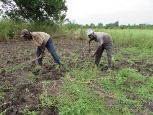 deux membres du groupement en train de sarcler et désherber avant les prochaines plantations