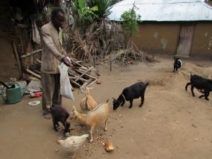 Les chèvres de M'AKAKO nourries par le vice-président du groupement Mahussi