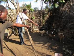 Lolo de l'ONG I.D.E.E.S. fait le comptage des chevreaux dans chaque famille
