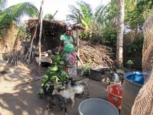 Des chevreaux sont prêts à être donnés à d'autres familles villageoises